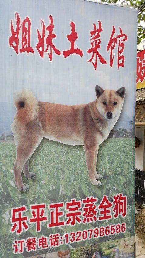 Dog restaurant - Jingdezhen - Deanna Roberts